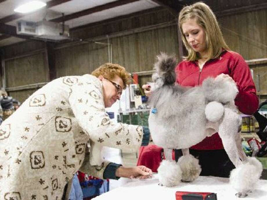 Pam and April Spurling groom Clark Kent, a miniature poodle, during The 38th Annual All-Breed Dog Shows, Obedience Trials & Rally Trials, presented by the Conroe Kennel Club at The Lone Star Exhibit Building and Equestrian Center Arena at The Montgomery County Fairgrounds in Conroe on Saturday. Exactly 1,000 purebred dogs competed in the show. Go to HCNPics.com to view and purchase this photo, and others like it. Photo: Staff Photo By Ana Ramirez / The Conroe Courier/ The Woodland