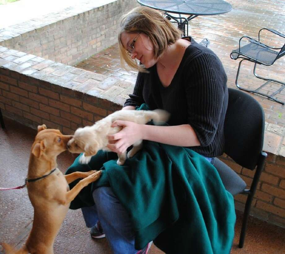 ACC student Katie Wham, of Pearland holds Leo as the puppy gets some attention from Daisy during the Rent A Puppy event on December 9.