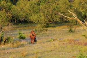 A day-long, hands-on workshop set for Oct. 15 on a Texas wildlife management area is aimed at giving novice and prospective hunters basic information and skills to begin hunting big game such as feral hogs and deer.