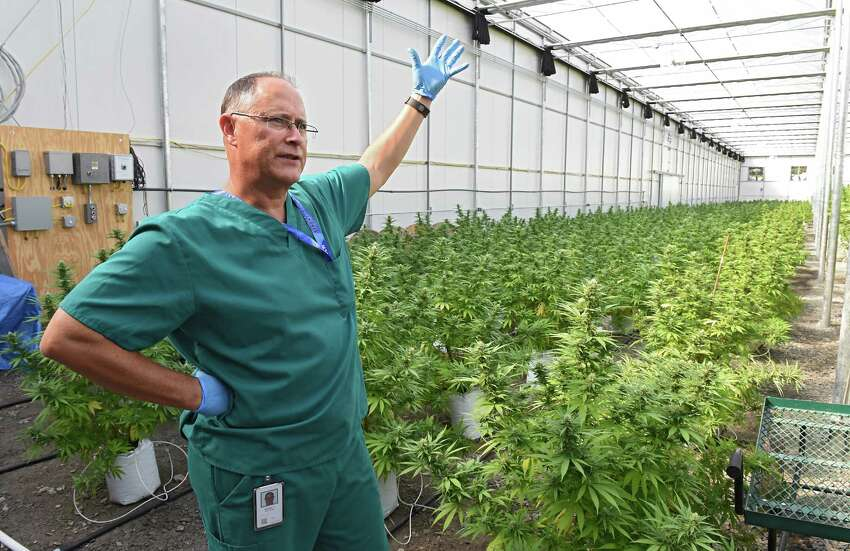 Horticulturalist Chuck Schmitt talks about the marijuana plants in the greenhouse at the Vireo medical marijuana facility in the Tryon Technology Park on Wednesday, Sept. 21, 2016 in Johnstown, N.Y. (Lori Van Buren / Times Union)