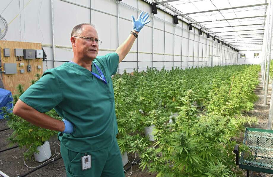 Horticulturalist Chuck Schmitt talks about the marijuana plants in the greenhouse at the Vireo medical marijuana facility in the Tryon Technology Park on Wednesday, Sept. 21, 2016 in Johnstown, N.Y. (Lori Van Buren / Times Union) Photo: Lori Van Buren / 40038089A