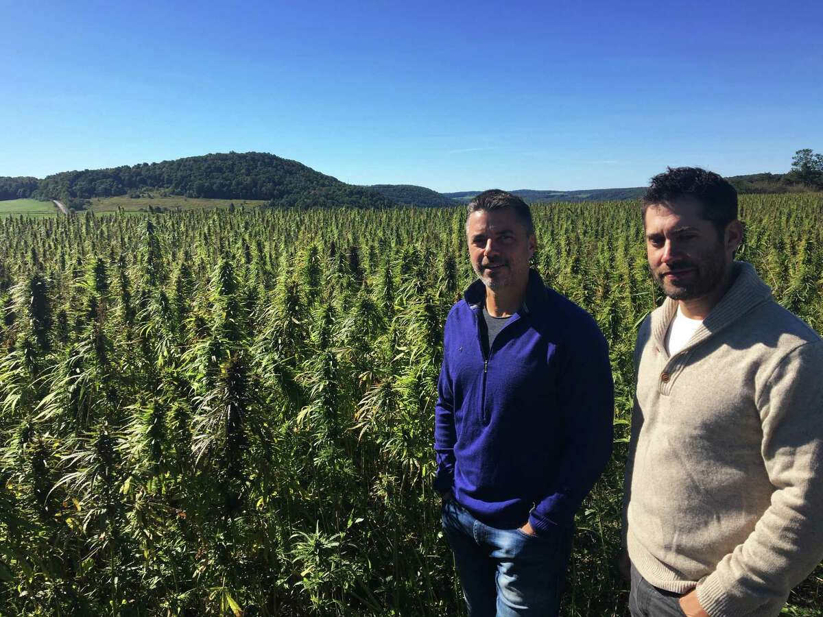 On Sept. 25, 2016, Mark Justh, left, and Dan Dolgin, right, stand beside a field of industrial hemp on their JD Farms in Eaton, N.Y. JD Farms in central New York harvested the state?'s first legal hemp this fall under a university research partnership. (AP Photo/Mary Esch) ORG XMIT: RPME104