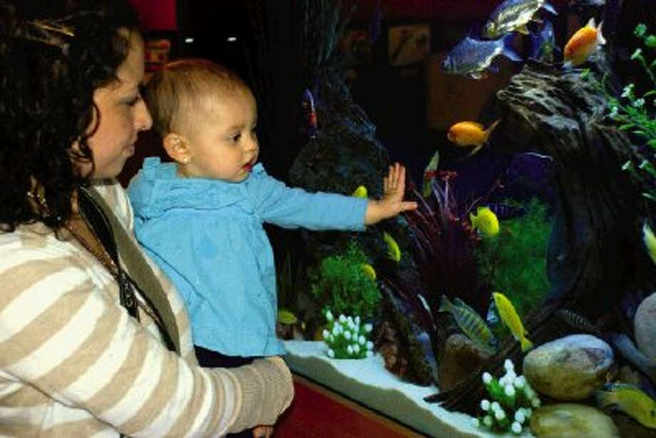 The museum replaced the old aquarium with a new custom-built model where toddlers stand eye to eye with colorful aquatic life.