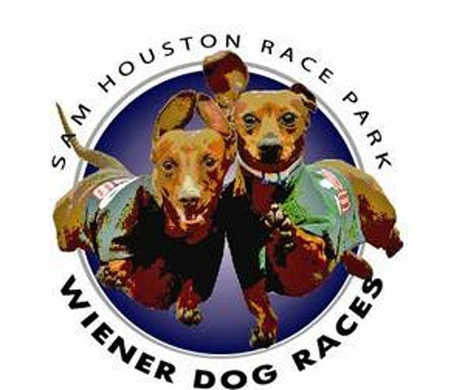 Wiener Dog Races At Sam Houston Race Park Saturday