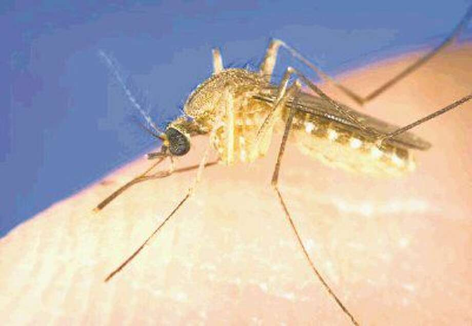 An influx of mosquitoes is one of many public health threats expected as a result of Harvey flooding.