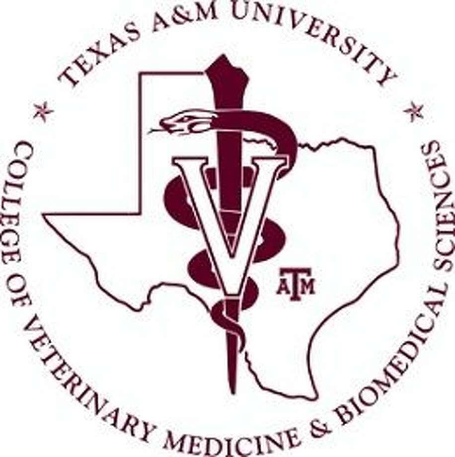 Texas A M Veterinary School Tour