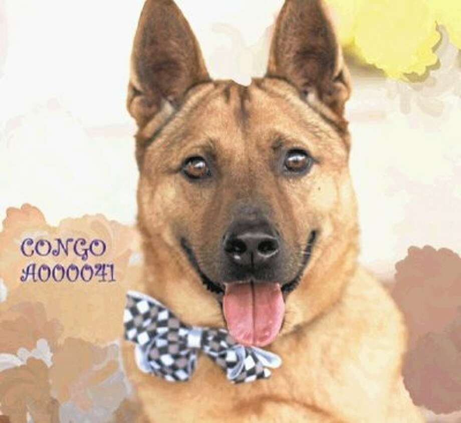 Meet Congo: Montgomery County pet adoption of the week, March 23, 2014 / @WireImgId=2668206