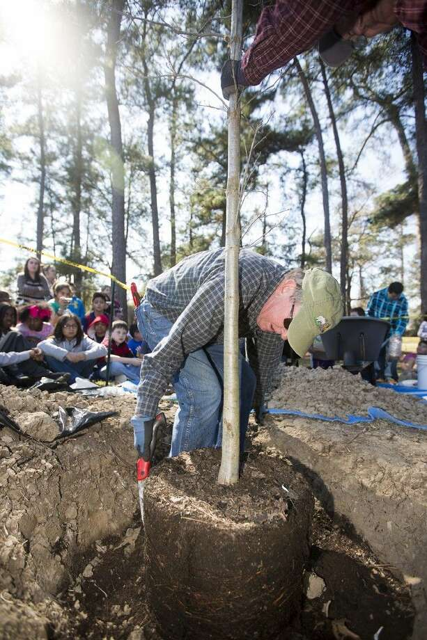 Hal Opperman prepares the base of a Swamp Chestnut Oak before students water and fill in the hole with dirt during an Arbor Day celebration Feb. 19, 2015, at Oak Forest Elementary School. Photo: ANDREW BUCKLEY