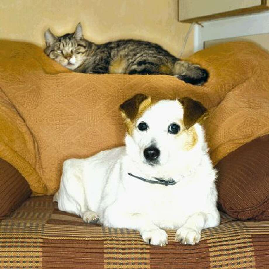 There are a number of infectious diseases transmittable between cats and dogs and their owners.