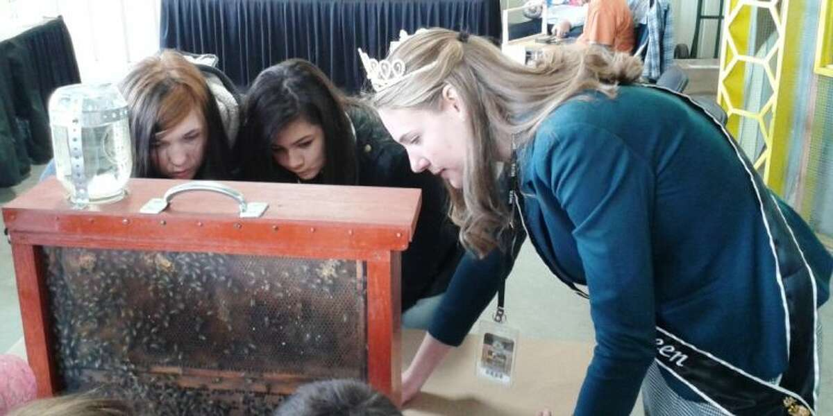 Texas Honey Queen Hayden Wolf teaches students about bees at the Beekeeping Booth at the Montgomery County Fair Monday.