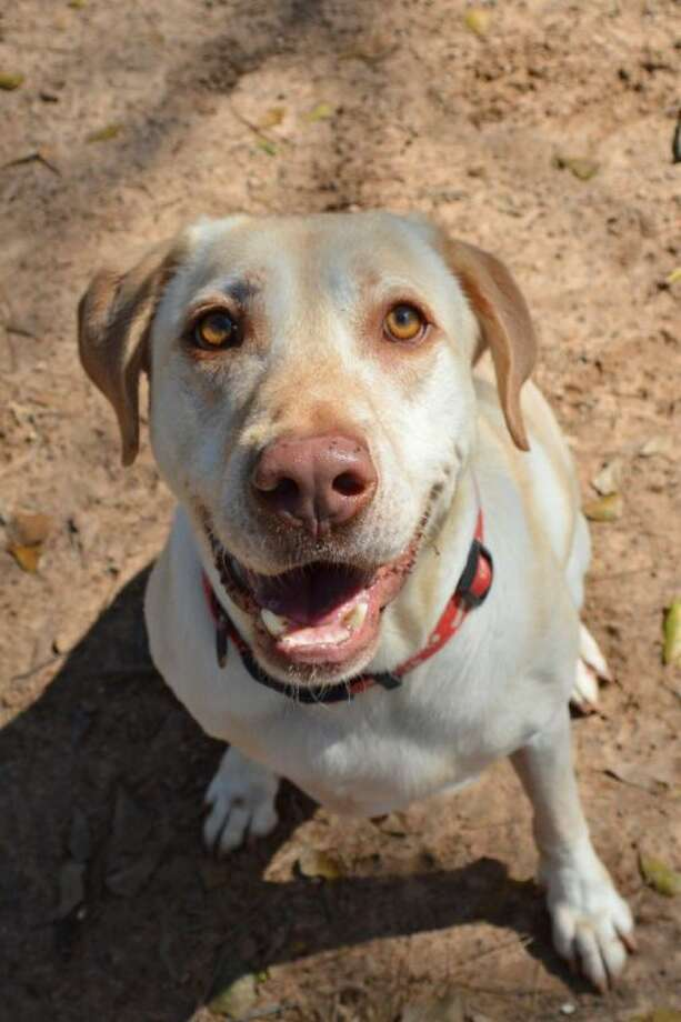 Woodrow needs a new home. Contact Abandoned Animal Rescue to take him home. Photo: Picasa