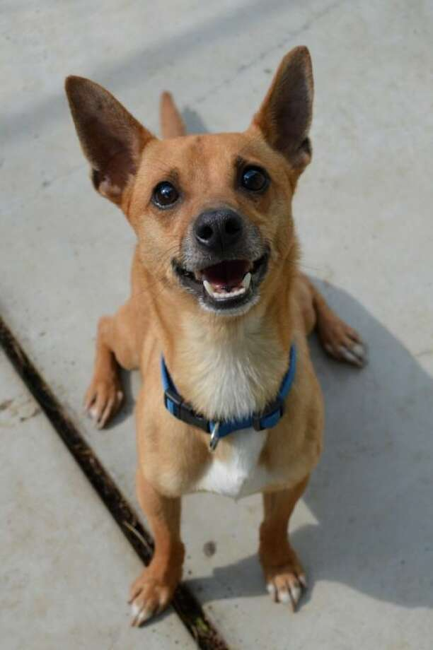 This playful pup is looking for a new home. Photo: Picasa