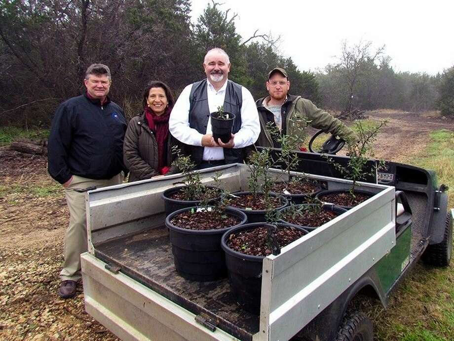 Commissioner Cagle displays historic oak tree saplings donated by Lady Bird Johnson Wildflower Center.