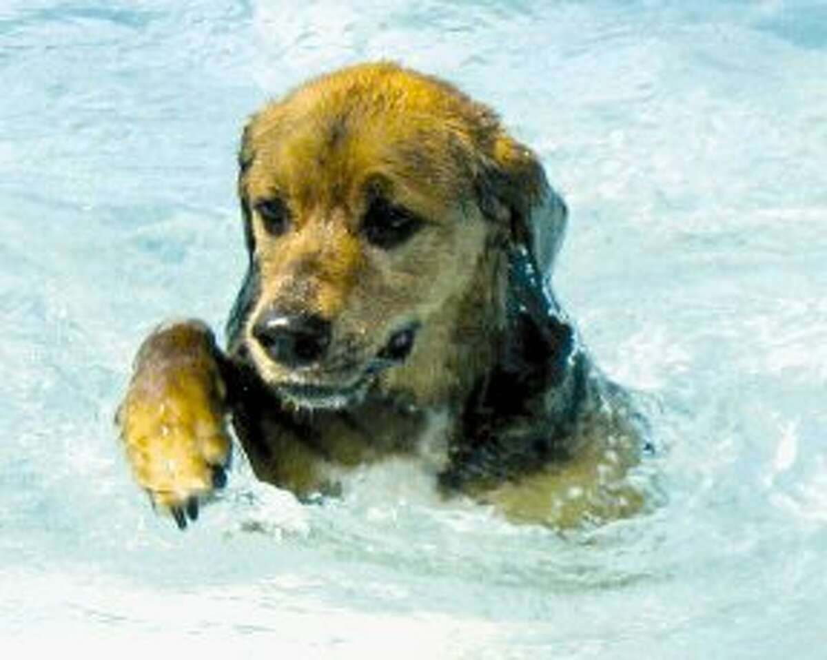 Leave the furry pets at home  As amazing as swimming the day away with your pup sounds, strangers might not get such a kick out of it. Dogs, like kids, also tend to have accidents in the water.
