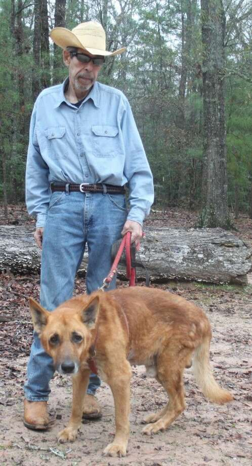 Bill Heyde holds Amigo the red wolf on a leash. Heyde came across Amigo four months ago and uses him for educational presentations. Photo: Jacob McAdams