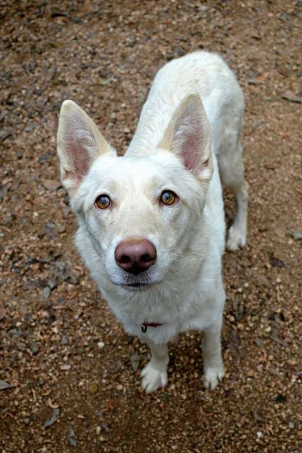 Sierra is looking for a new home. Photo: Picasa