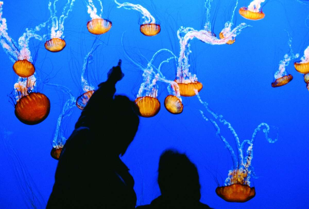 Best day trips to escape the Bay Area heat: Spend a day at the Monterey Bay Aquarium: Even though it's a bit of a drive, the Monterey Bay Aquarium is mostly indoors and boasts a wide variety of breath-taking sea life. The aquarium is currently home to a special exhibition titled