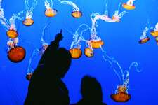 Check out the Monterey Bay Aquarium; it's a crowd pleaser for the whole family.