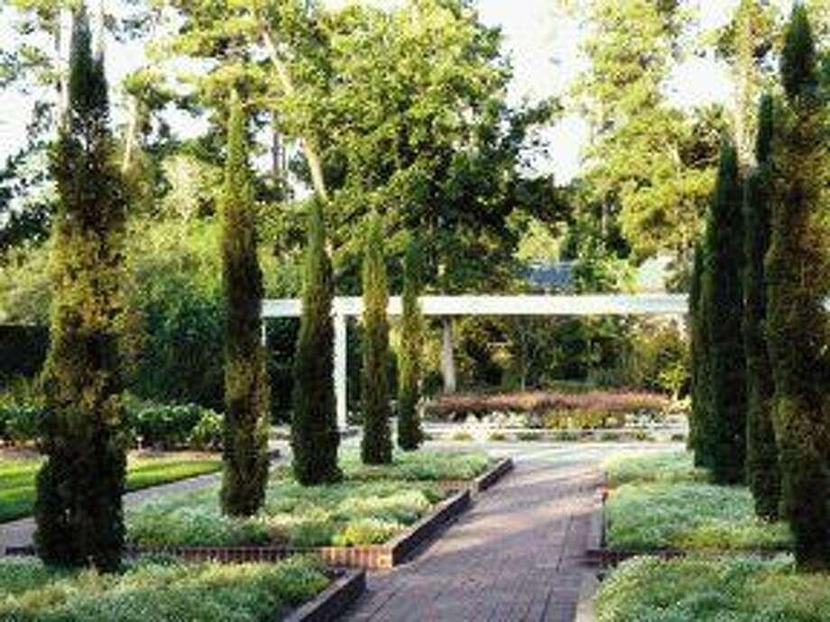 The Renaissance Garden At Mercer Botanic Gardens Will Soon Feature Six  Silver Date Palms Near The