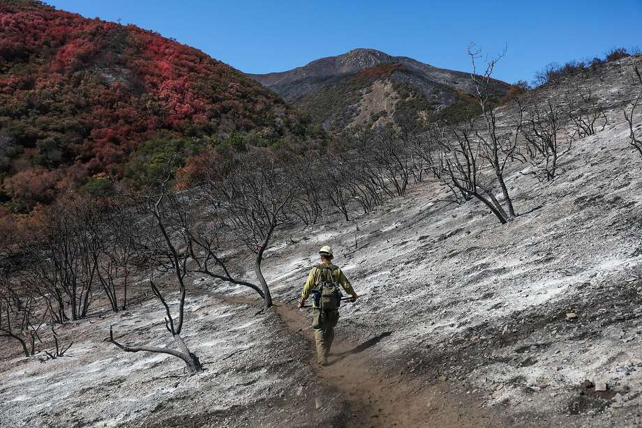 Firefighter Mike Leslie walks through a forested area that was devastated by the Soberanes Fire, in Monterey, California, on Thursday, Sept. 29, 2016. Mike Leslie and his crew aided in fighting the fire. Photo: Gabrielle Lurie, The Chronicle