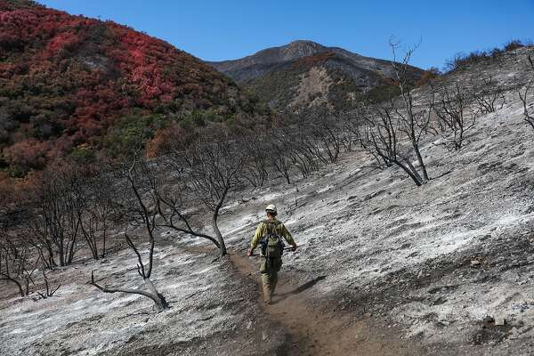 Firefighter Mike Leslie walks through a forested area that was devastated by the Soberanes Fire, in Monterey, California, on Thursday, Sept. 29, 2016. Mike Leslie and his crew aided in fighting the fire.