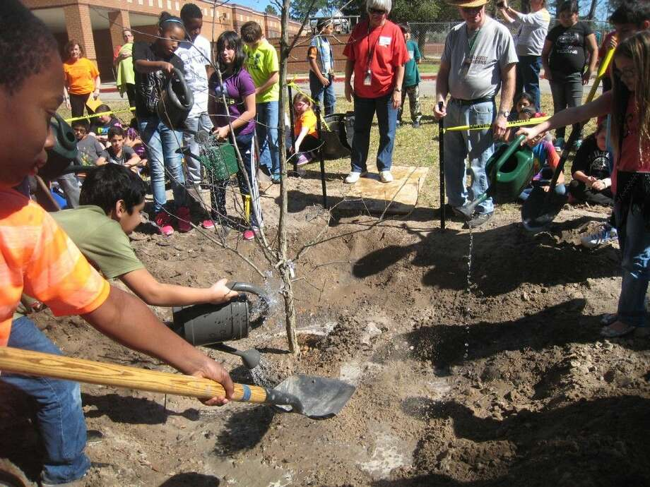 Oak Forest Elementary fifth grade students work to cover the base of a chinquapin oak during their special tree planting ceremony Thursday, Feb. 18, 2016.