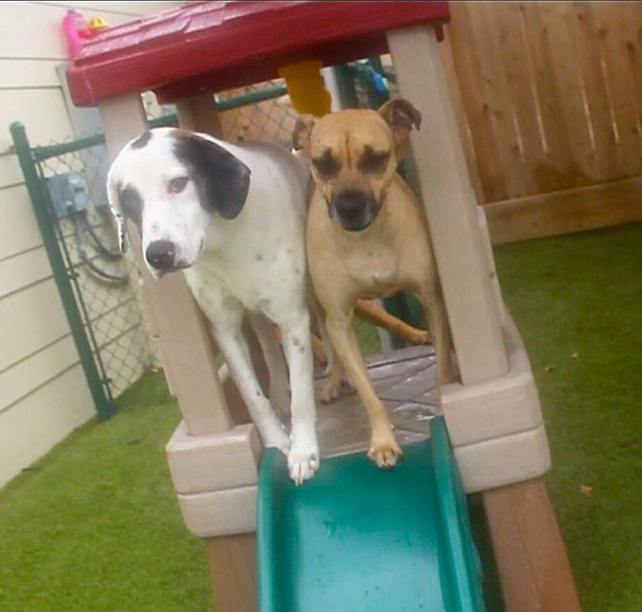 One of the activities dogs enjoy is having play time outside with their new friends.
