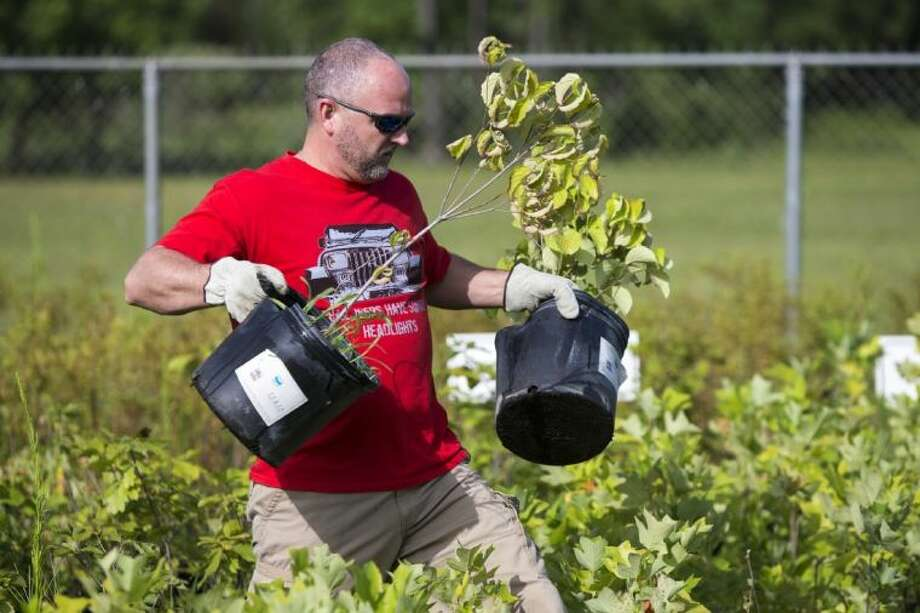 Jason Dillard picks out a couple of trees as Trees for Houston gives away free trees July 11, 2014, in Humble. Almost 15,000 trees were prepared to be given away with people coming from as far as Round Rock in previous years to partake in the organizations generosity. Photo: Andrew Buckley