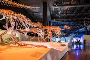 The Houston Museum of Natural Science's Hall of Paleontology contains more than 450 fossils and fossil replicas, providing a vivid glimpse into the incredible 3.5-billion-year story of life on Earth. It's one of the attractions included on the City Pass.