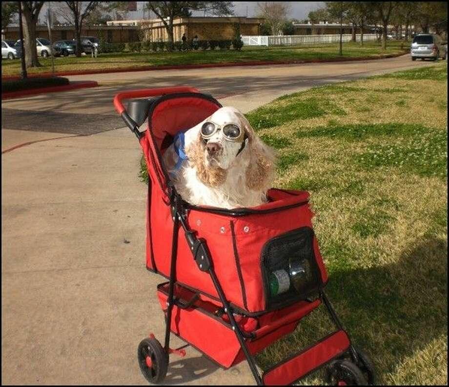 Teddy Bear in his stroller. Photo: Nancy Holchak