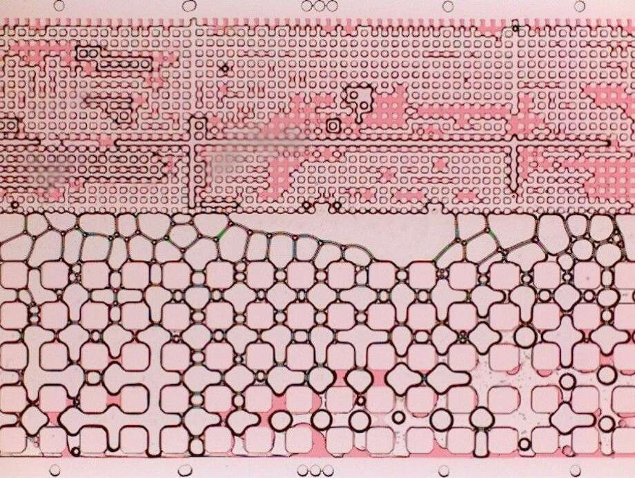 Foam sent through a microfluidic model created at Rice University shows its ability to remove oil (pink) from low-permeability formations. Rice scientists conducted experiments to see how foam would compare with water, gas or combinations of the two for use in enhanced oil recovery.