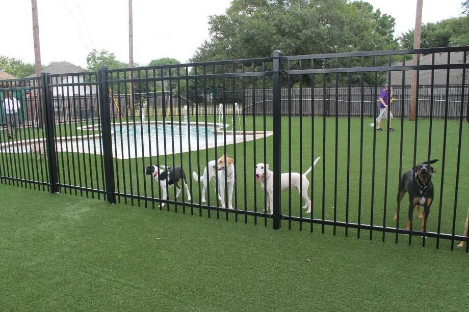 Dogs playing in the pool area. Photo: Taelor Smith