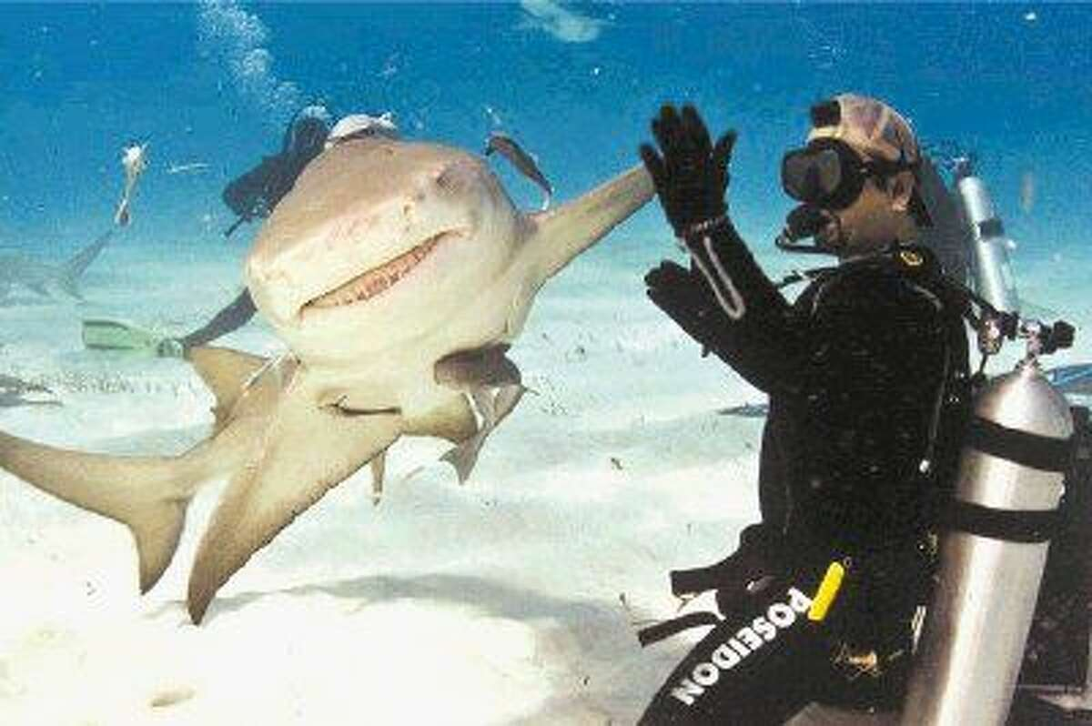 In this five-year-old photo shot in the Bahamas, which has since become a viral sensation on the Internet, a lemon shark