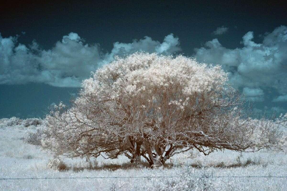 Rebecca Hall's photograph