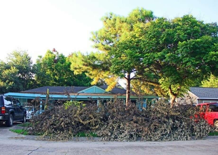 Houston to resume tree waste and heavy trash collection - Houston ...