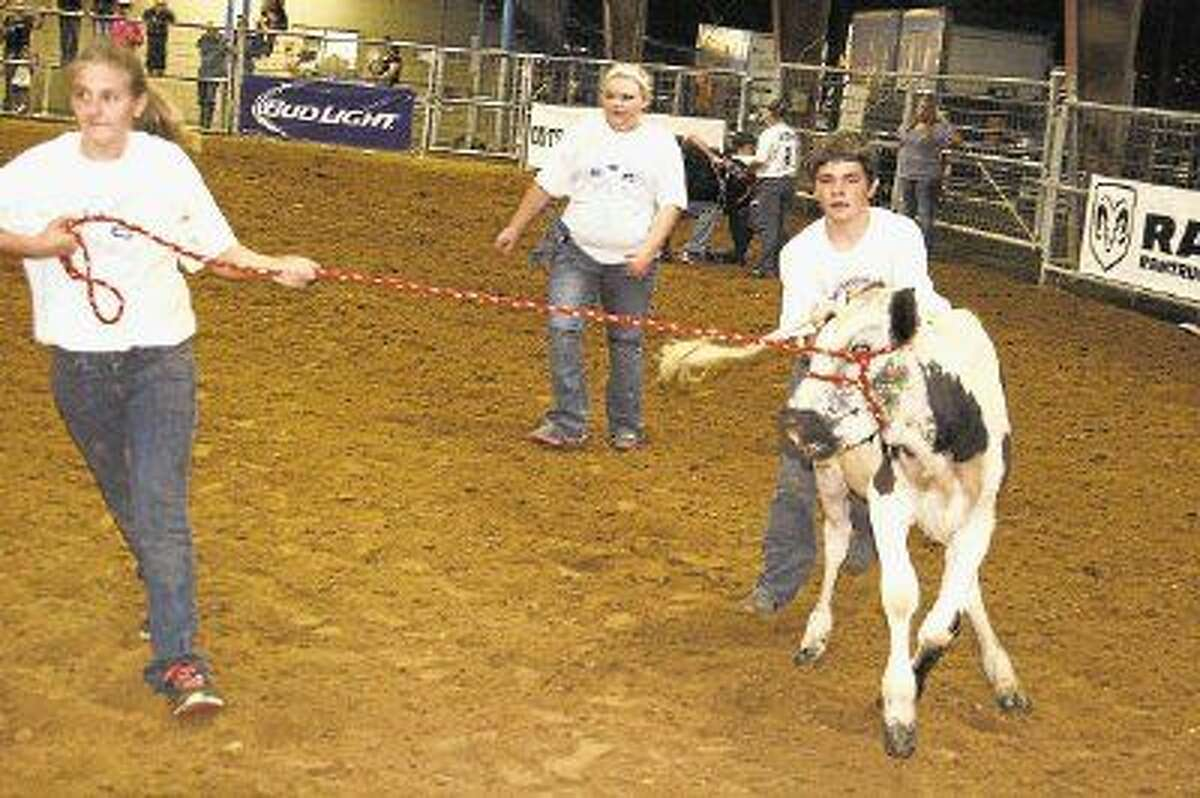Starting on Wednesday, Sept. 10, students from both organizations will participate in the agriculture shows that include poultry, rabbit, swine, goat, lamb and steer.