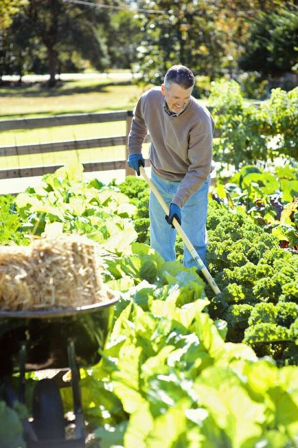 Low maintenance vegetable gardening for a bountiful for Low maintenance gardens for the elderly