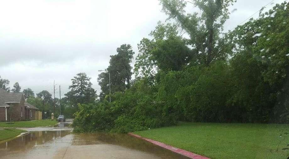 A tree blocks half a flooded street in Northwest Harris County.