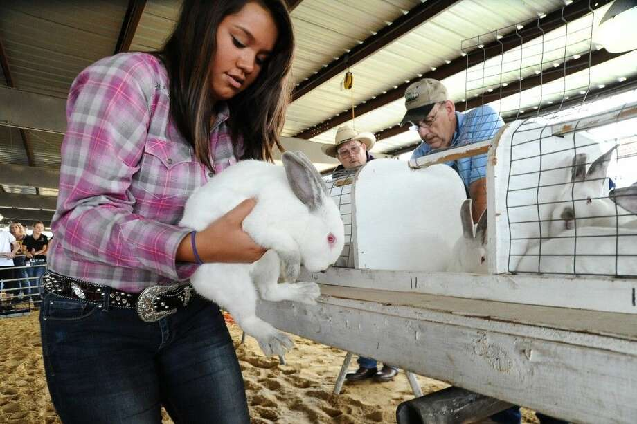 Camille Kerr places her rabbits back into a carrier after judging during last year's Pasadena Livestock Show.