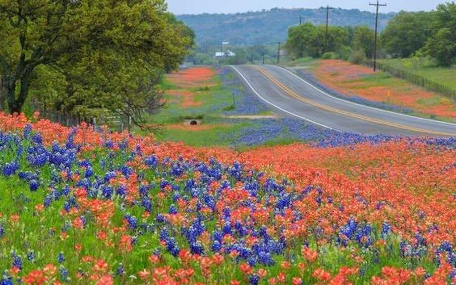 Texas is blessed with more than 5,000 species of wildflowers, and this spring has seen a proliferation of wildflower populations.