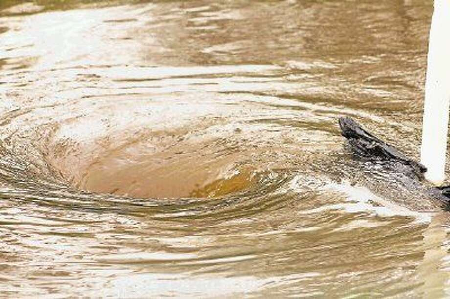 One of the biggest dangers of flooding are whirlpools that are created as the water flows through culverts. Photo: Vanesa Brashier