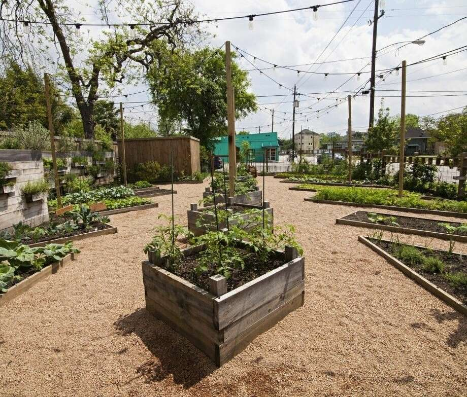 Landscaping With Edibles : Landscaping with edibles is all the rage houston chronicle