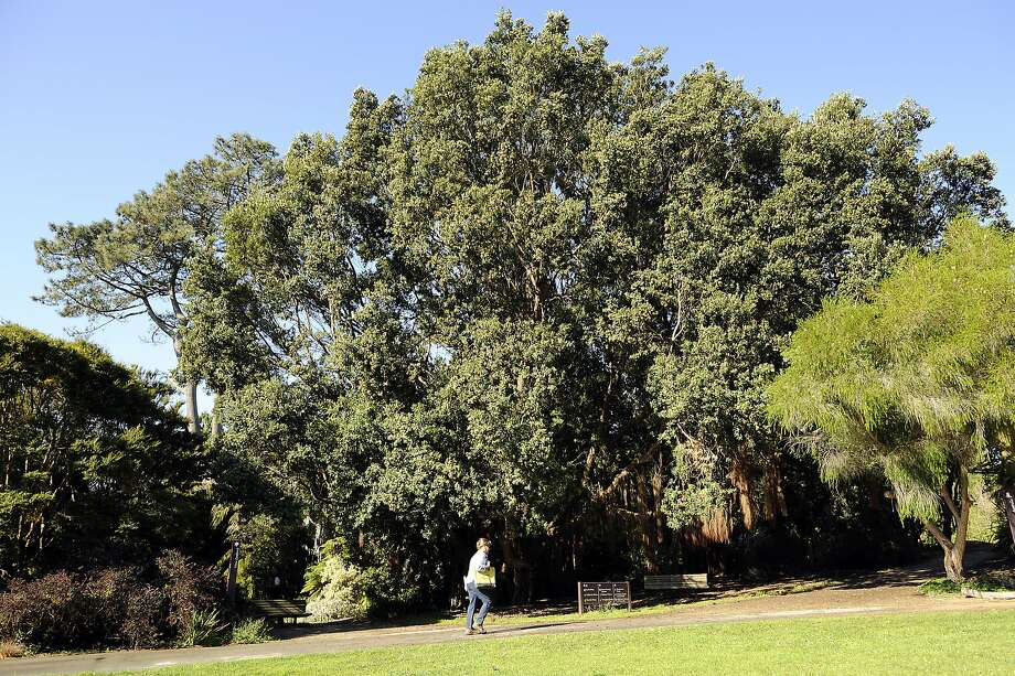 A gang of seven men robbed another man in Golden Gate Park. Photo: Michael Short, Special To The Chronicle