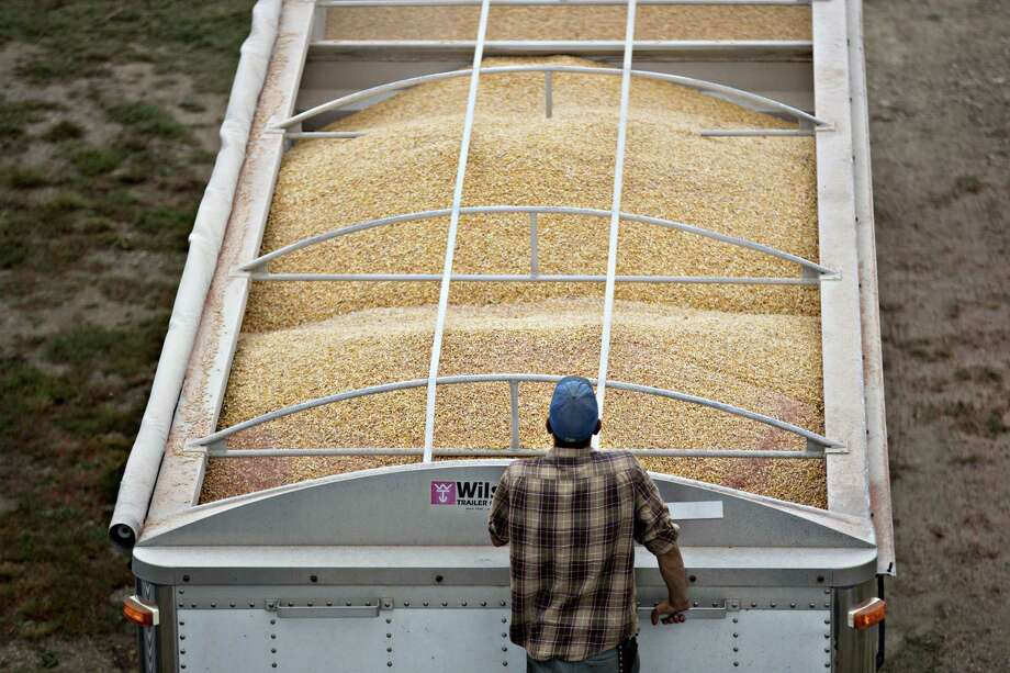 A worker monitors Monsanto Co. Dekalb brand corn being loaded into a truck in Tiskilwa, Illinois. Lower crop prices continue to weigh on farmer spending, leading Monsanto to forecast a return to earnings growth in fiscal 2017 that trailed some analysts' estimates. Photo: Daniel Acker /Bloomberg News / © 2016 Bloomberg Finance LP