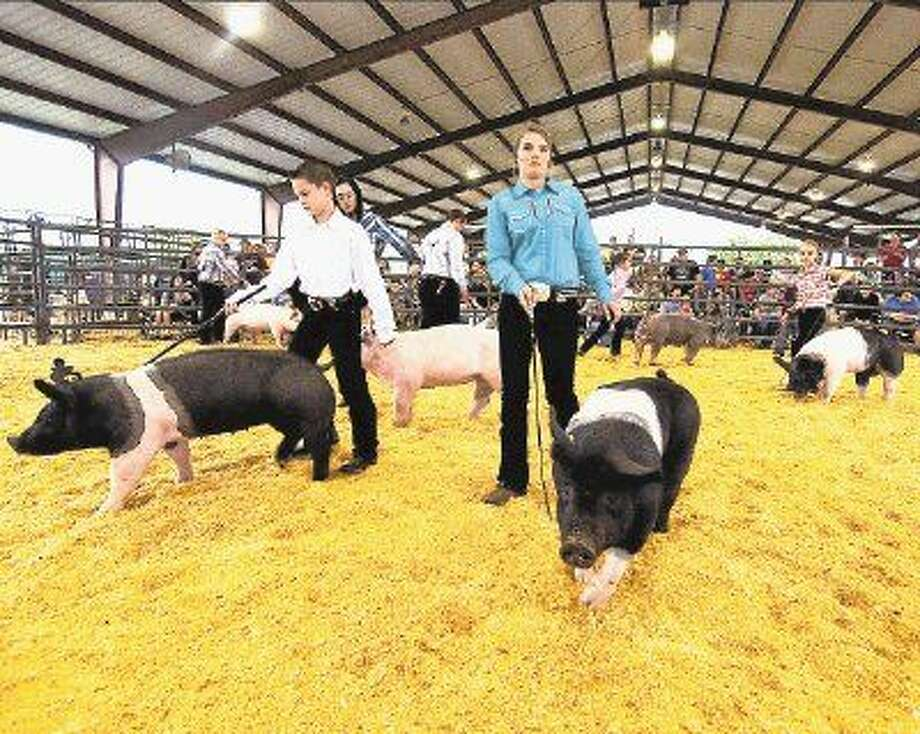 Magnolia ISD students showed off their hard work during the 2014 MISD Livestock Sept. 19-20. Photo: Tony Gaines