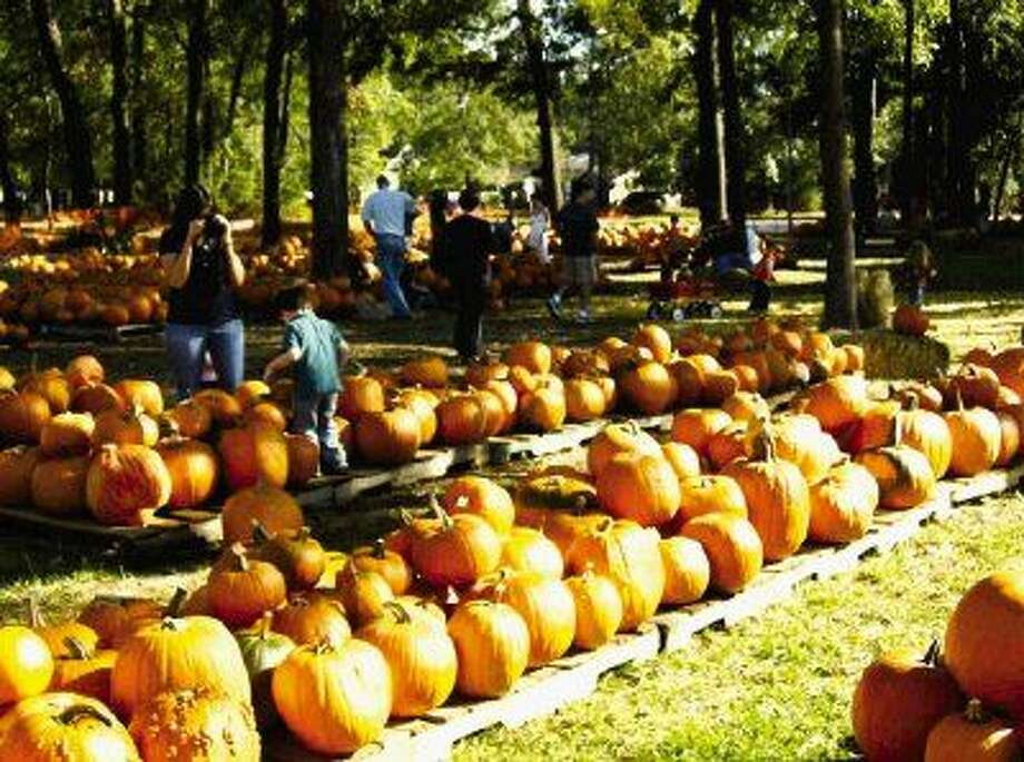 The pumpkin patch at Good Shepherd Episcopal Church in Kingwood will be open for business beginning Oct. 16.