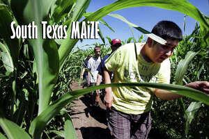 South Texas MAiZE:  911 U.S. Hwy. 90 East, Hondo, Texas 78861