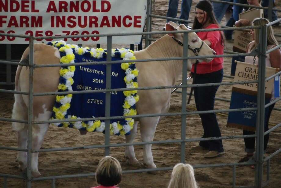 Mikenzie Yates raised this year's Dayton FFA Livestock Show grand champion market steer. Thrif-Tee Food Center bought the 1,312-pound animal for $12.50 a pound at the auction held Saturday, May 21. Photo: Casey Stinnett