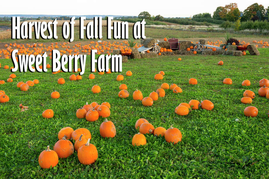 Here are pumpkin patches to visit around San Antonio 2018.