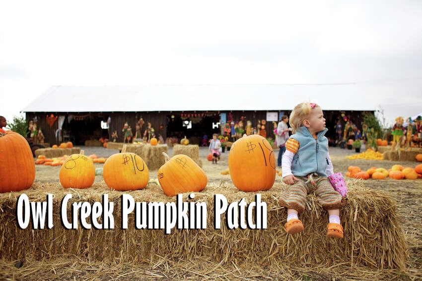 Owl Creek Pumpkin Patch: 12355 Military Drive Opens Sept. 28.